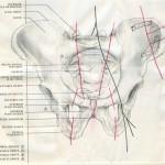 Pelvis Fractures